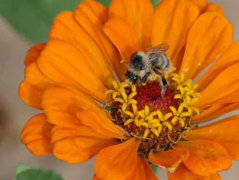 Évente tartható a méhpempő kúra